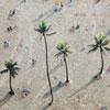 <span>Eastpak Motiv: Palm Pause</span>