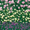 <span>Eastpak Motiv: Tullip Garden</span>